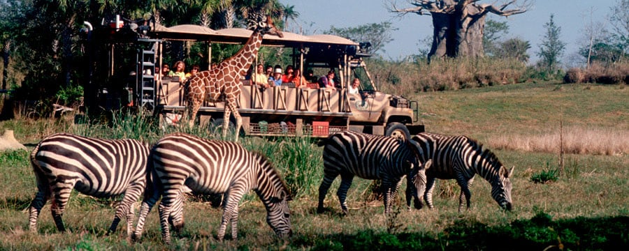 Safari no Animal Kingdom na Disney em Orlando