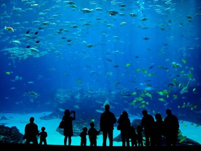 Miami Seaquarium: O maior aquário da Flórida