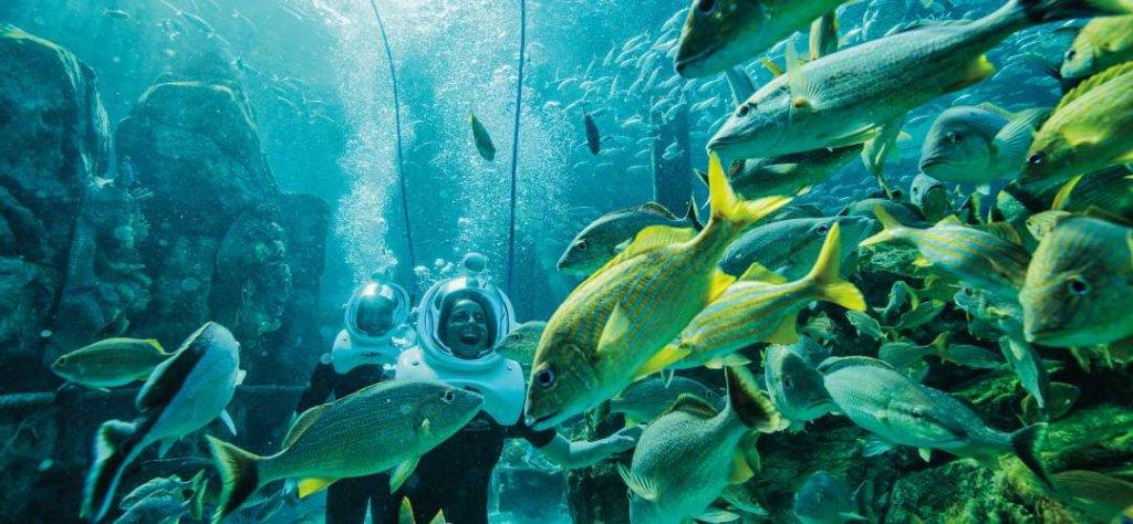Seaventure: Passeio Subaquático no parque Discovery Cove Orlando