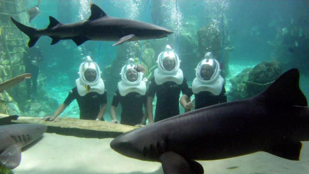 Encontro com tubarões no Seaventure: Passeio Subaquático no parque Discovery Cove Orlando